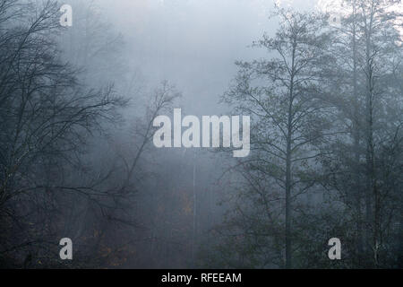 Spooky silhouettes of trees with no leafs on foggy and cold autumn morning - Stock Photo