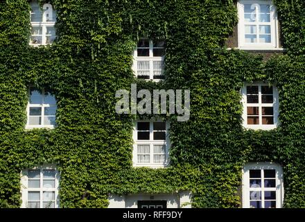 DEU, Germany, Essen : Facade of a house, overgrwon by ivy - Stock Photo