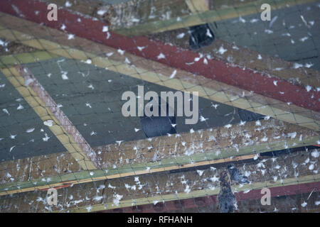 Glasgow, Scotland, UK. 25th January 2019. Various scenes showing different views from around the Queen Elizabeth University Hospital.  There have been 2 patient deaths reported recently which it is believed are linked to infections contracted through pigeon droppings. Credit: Colin Fisher/Alamy Live News - Stock Photo