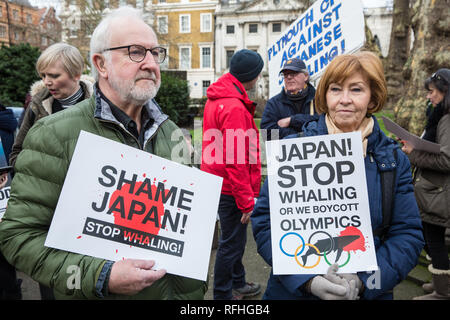 London, UK. 26th January, 2019. Animal rights campaigners prepare to take part in the Japan: No Whaling march from Cavendish Square to the Japanese embassy following Japan's announcement that it withdraw from the International Whaling Commission (IWC) and resume commercial whaling with effect from July 2019. The march was organised by the London Committee for the Abolition of Whaling. Credit: Mark Kerrison/Alamy Live News - Stock Photo