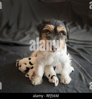 Newborn dog baby . One day old - jack russell terrier puppies wiht her mama - Stock Photo