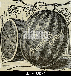 . Twentieth annual catalogue : spring 1900. Nursery stock Indiana Indianapolis Catalogs; Vegetables Seeds Catalogs; Flowers Seeds Catalogs; Agricultural implements Catalogs. INDIANA SWEETHEART. AMERICAN QUEEN. Rind thin but tough, making it an excellent shipper. About the same shape of Hoosier King. Color light green. Flesh bright red, very sweet and juicy, and never stringy. The seed is grayish brown, and while the flesh is very tender and mealy, it is always solid. The vines are rank, vigorous growers and prolific bearers, commencing to bear early and continue until killed by frost. The melo