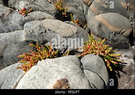 Coastal vegetation, Tasmania, Australia - Stock Photo