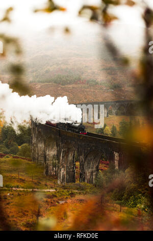 Steam train passing Glenfinnan Viaduct with fog covered mountains and flower foreground during a moody autumn day (Glenfinnan, Scotland, Europe) - Stock Photo