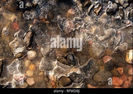 Pebbles in a frozen pond, Cradle Mountain, Australia - Stock Photo