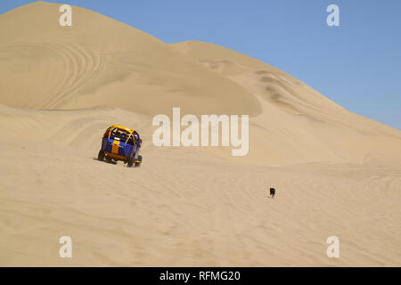 A naughty dog chasing the running dune buggy on the desert dunes of Huacachina, Ica region, Peru - Stock Photo