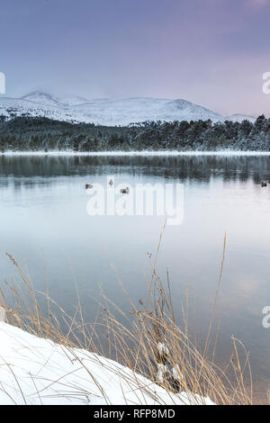 Loch Morlich in the Cairngorms National Park of Scotland. - Stock Photo