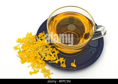 Herb tea made of cowslip, Primula officinalis, - Stock Photo