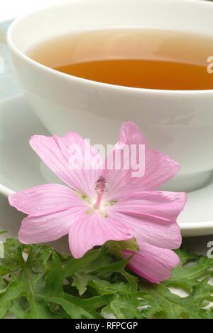 Herb tea made of Musk mallow, medicinal tea, Malva moschate - Stock Photo