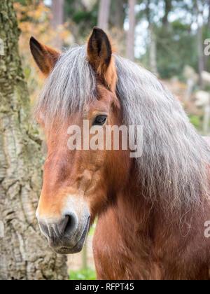 Horse face, vertical portrait - Stock Photo