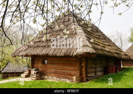 Old ukrainian house with straw roof and cherry tree flowers in spring time - Stock Photo