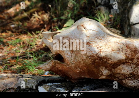 Strange shaped rock formation resembling face with large mouth, nose and eyes resting in shade of large tree on traditional stone wall with grass - Stock Photo