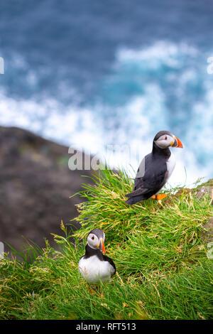 Puffins at Faroe Islands, landscape. Wild europe - Stock Photo