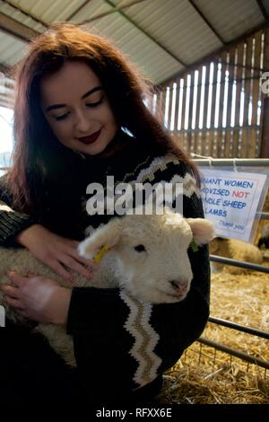 A girl with long brunette hair, make up and a big jumper hugs and strokes a white new born lamb on a farm. The lamb looks at the camera and the girl s - Stock Photo