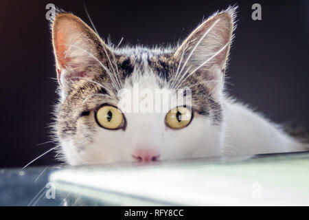 Katzen Portraits - Stock Photo