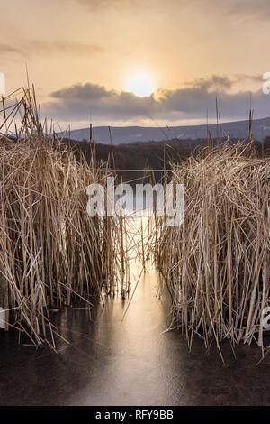 Setting sun shining through foreground reeds and dropping golden sun rays on frozen, reflective lake ice and water - Stock Photo