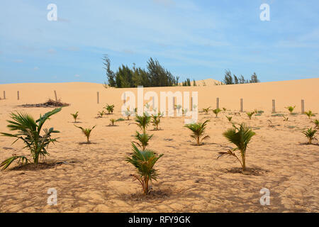 A small palm tree nursery in the White Sand Dunes area near Mui Ne in south central Bình Thuan Province, Vietnam - Stock Photo