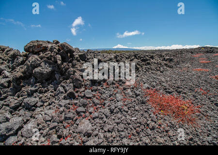 Volcanic rocks and red flowers close to the road looking up to Mauna Kea mountain at Big Island, Hawaii - Stock Photo