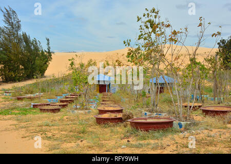 A small tree nursery in the White Sand Dunes area near Mui Ne in south central Bình Thuan Province, Vietnam - Stock Photo
