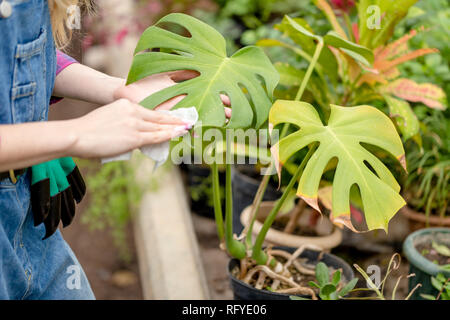 woman's hands wiping the dust from exotic flower - Stock Photo