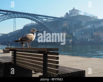 Seagull on a bench by the river Douro in Porto - Portugal - Stock Photo