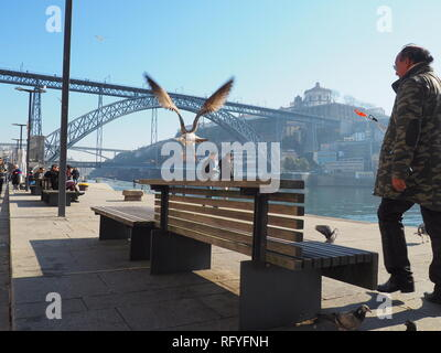 Seagull flying on the river Douro in Porto - Portugal - Stock Photo