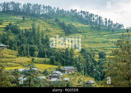 A Beautiful Village Surrounded by Deodar Tree in Himalayas, Sainj Valley, Himachal Pradesh, India - Stock Photo