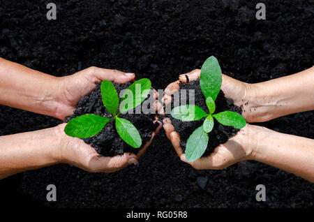 environment Earth Day In the hands of trees growing seedlings. Bokeh green Background Female hand holding tree on nature field grass Forest conservation - Stock Photo