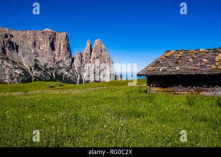 Hilly agricultural countryside with green pastures and wooden houses at Seiser Alm, Alpe di Siusi, the mountain Schlern, Sciliar, in the distance - Stock Photo