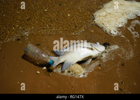 Dead fish and plastic bottle on beach - Stock Photo