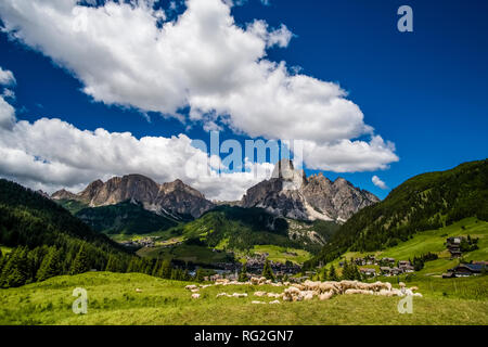 Mountain Mt. Sassongher, Sass Songher, raising above the town, a herd of sheep grazing on a green pasture - Stock Photo