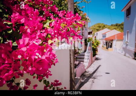 Flowers at narrow street in a picturesque Greek island. Sunny summer day, summer time, vacation in Europe - Stock Photo