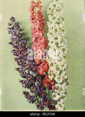 . California sets the fashion. Nurseries (Horticulture) Catalogs; Flowers Seeds Catalogs; Roses Catalogs; Plants, Ornamental Catalogs. SWISS GIANT PANSY 3230 White King. Superb spikes 4-5 ft. in height. Giant double, snow white flowers. Pkt. 20c; 3 tor 50c 3259 Pink King. Salmon pink. Pkt. 25c; 3 for 60c 3254 Carmine King. Rich carmine. Pkt. 15c; 3 for 40c 3255 Lilac King. Rich lavender lilac. Pkt. 25c; 3 for 60c 3233 Giant Imperial Mixed. Beautiful shades. Tall, giant flowers. Pkt. 20c; 3 for 50c. DELPHINIUM—NEW PACIFIC GIANT. Please note that these images are extracted from scanned page imag - Stock Photo