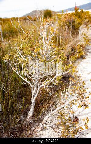 Vegetation, South West Tasmania, Australia - Stock Photo