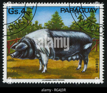 RUSSIA KALININGRAD, 22 APRIL 2017: stamp printed by Paraguay, shows sow,  circa 1976 - Stock Photo