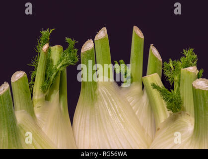 Fine art still life color macro of an isolated bunch of three fennel bulbs with feather green on black paper background - Stock Photo
