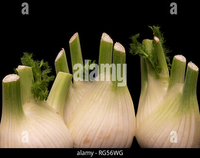 Fine art still life color macro of an isolated bunch of three fennel bulbs with feather green on black background - Stock Photo