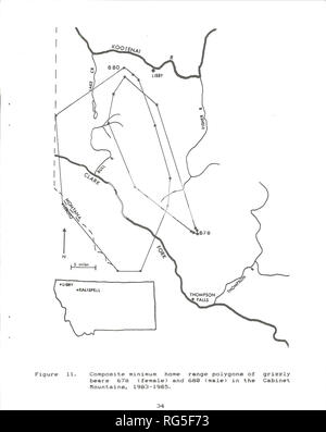. Cabinet Mountains grizzly bear study. Wildlife management; Grizzly bear. i. Please note that these images are extracted from scanned page images that may have been digitally enhanced for readability - coloration and appearance of these illustrations may not perfectly resemble the original work.. Kasworm, Wayne, 1954-; Montana. Department of Fish, Wildlife, and Parks. [Helena, Mont. ] : The Dept. - Stock Photo