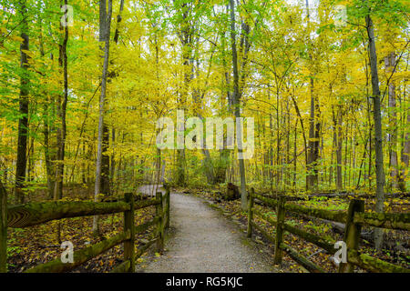 A hike through the fall woods. Wooden fencing lines the winding trail. Tall trees and fallen leaves surround the trail. Beautiful colors abound. - Stock Photo