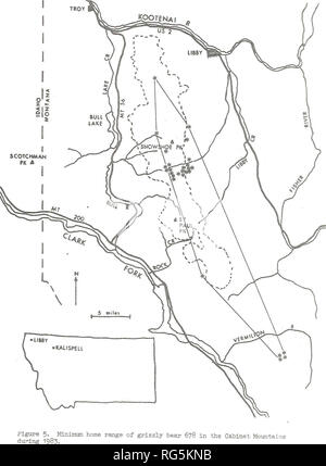 . Cabinet Mountains grizzly bear study. Wildlife management; Grizzly bear. 23. Please note that these images are extracted from scanned page images that may have been digitally enhanced for readability - coloration and appearance of these illustrations may not perfectly resemble the original work.. Kasworm, Wayne, 1954-; Montana. Department of Fish, Wildlife, and Parks. [Helena, Mont. ] : The Dept. - Stock Photo