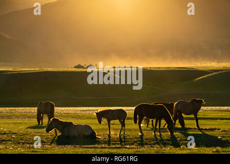 Silhouette of Horses at sunset, Orkhon River Valley, Kharkhorin, Ovorkhangai Province, Mongolia - Stock Photo