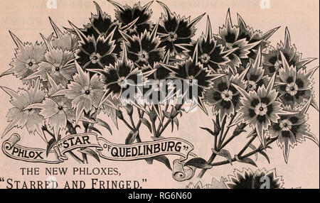 """. Burpee's farm annual. Nursery stock Pennsylvania Philadelphia Catalogs; Flowers Pennsylvania Catalogs; Vegetables Pennsylvania Catalogs; Seeds Pennsylvania Catalogs. THE NEW PHLOXES, """"Starred and Fringed."""" When first introduced from Germany we planted quite an area in both the """"Slar of Qiiedlinbiirg"""" and """" Fimbriata"""" Phlox, from which we have made careful selections each year, and now for the first time are able to offer the extra selected seed of our own growing, and as the two varieties are continually crossing, we offer both together as """"Starred and Frin - Stock Photo"""