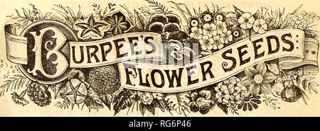 . Burpee's farm annual, 1887 : garden, farm, and flower seeds. Nursery stock Pennsylvania Philadelphia Catalogs; Flowers Catalogs; Vegetables Catalogs; Seeds Catalogs. The increased attention that we have lately devoted to the growth, selection and testing of Flower Seeds, has met the hearty approval of our customers. We are determined to make Burpee's Flower Seeds as widely popular for high quality as are our Vegetable Seeds. Not only do we personally inspect the growing crops from which our seed is saved, but we have also, for a year past, put this department under the personal management (r - Stock Photo