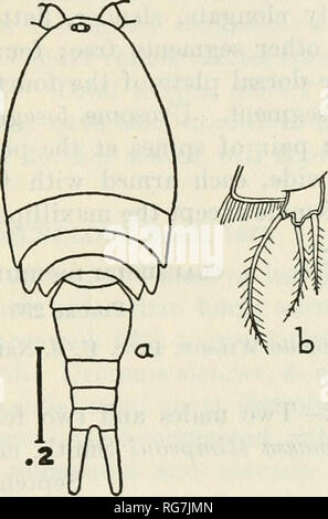 """. Bulletin - United States National Museum. Science. COPEPODS OF THE WOODS HOLE REGION"""" 343 Distributimi.—Russia (Fischer); Sweden (Lilljeborg); Germany (Vosseler, Schmeil); Poland (Lande); Norway (Sars); France (Richard) ; Bohemia (Fric) ; Turkestan (Uljanin) ; British Isles (Brady, Scott) ; Hungary (Daday); United States (Forbes); Min- nesota (Herrick); Ohio (Turner) ; Nantucket Island (Forbes). Color.—Body rather opaque and light brown, with red oil globules scattered through the metasome; eye bright red; eggs violet or purple. Femal&.—Metasome elliptical, a little more than half a - Stock Photo"""
