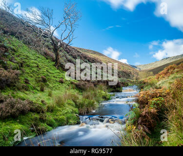 Great Britain, England, Derbyshire, Peak District, Fairbrook in autumn - Stock Photo