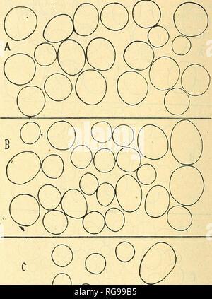 """. Bulletin trimestriel de la Société mycologique de France. Mycology; Fungi; Fungi. 38 FERNAND MOREAU. courbes de fréquence difïérentes marqueraient exactement. O 00 o FlG.3.— Spores de Sporodinia grandis cultivé sur milieu au saccharose. A, Saccharose 2 """"/n ; b, Saccliarose 10 """"/o ; c, Saccharose 30 """"/g. r> • .500 Grossisement : . 1 les dissemblances des spores de ces divei's lots, mais, limitées au nombre restreint auquel nous les avons réduites, nos. Please note that these images are extracted from scanned page images that may have been digitally enhanced for readability - - Stock Photo"""
