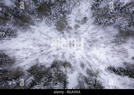 snowy winter forest from drone point of view - Stock Photo