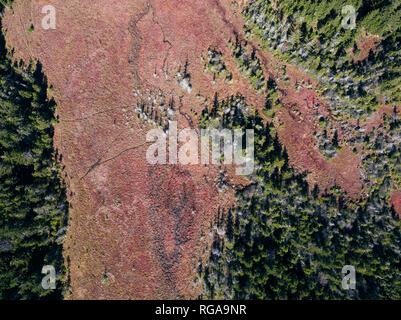 USA, West Virginia, Aerial view of Dolly Sods Wilderness area - Stock Photo