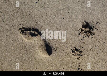 Hund und Mensch, Spuren im Sand, Playa de Famara, Lanzarote, Kanarische Inseln, Spanien - Stock Photo