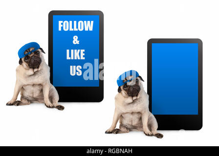 cute pug puppy dog looking smart, sitting next to tablet phone with text follow and like us, wearing blue cap, isolated on white - Stock Photo